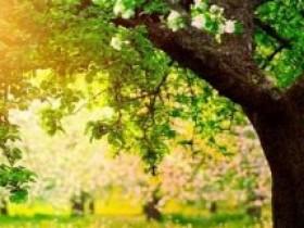 理想里的生活大树